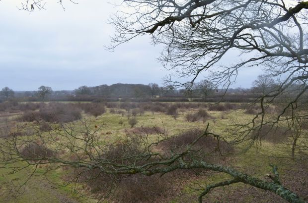 View of the changing habitat from the tree platform