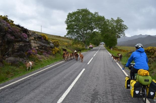 Me herding the goats