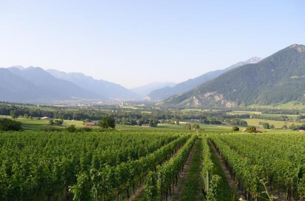 Lovely vineyard views