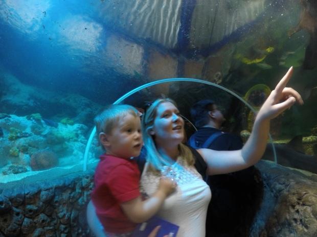 At the Sea Life centre