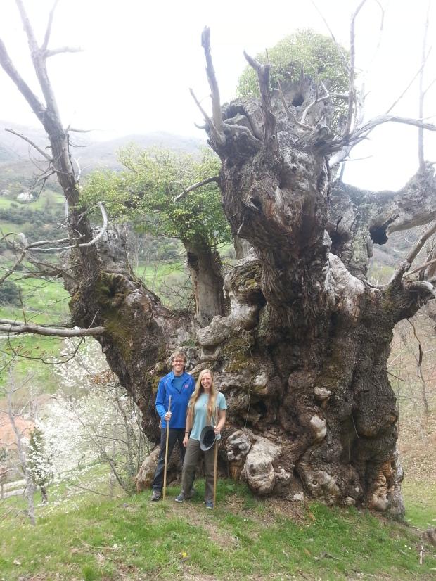 06 Giant tree