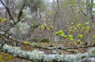 Leaves and lichen