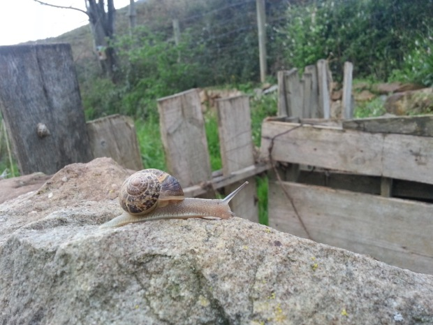 01 Snail
