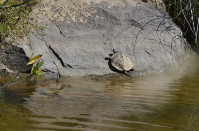 00 turtle 2