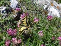 1 Hike2 butterfly