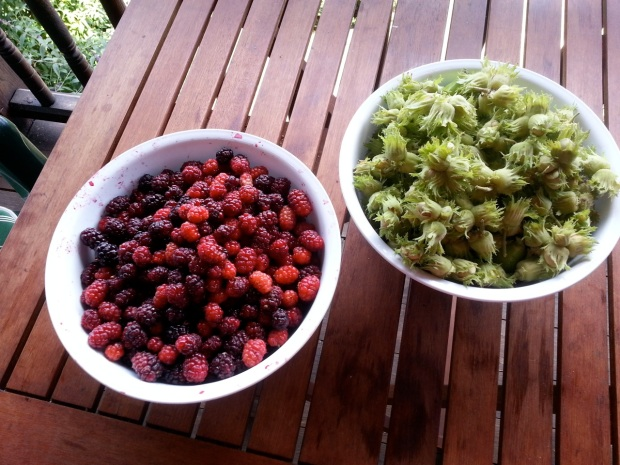 05_Mulberries and hazelnuts