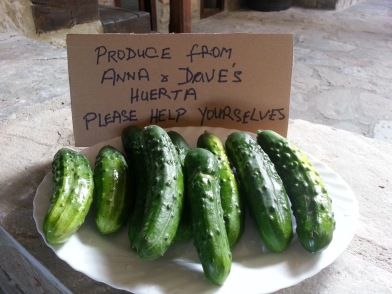17-free-cucumbers