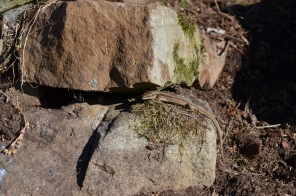 Basking lizard