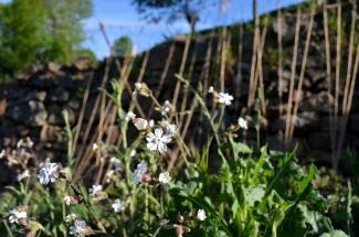 Wild flowers everywhere