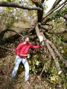 Tree chopping