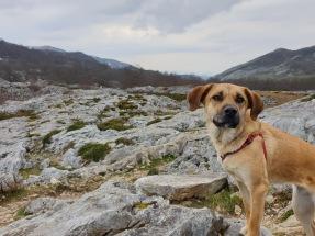 Explorer dog