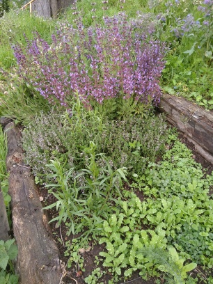Sage, thyme, tarragon and poppies