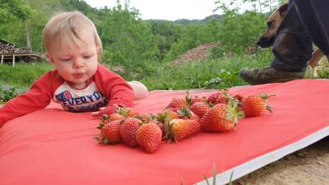 The strawberry connoisseur
